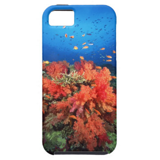 Coral and fish case for the iPhone 5