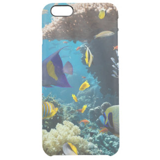 Coral and fish in the Red Sea, Egypt Clear iPhone 6 Plus Case