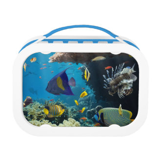 Coral and fish in the Red Sea, Egypt Lunchbox