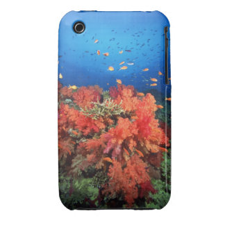Coral and fish iPhone 3 cases