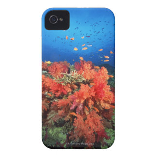 Coral and fish iPhone 4 case