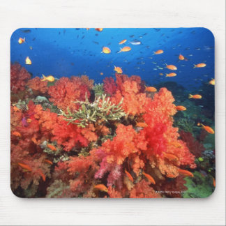 Coral and fish mouse mat