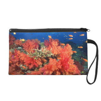 Coral and fish wristlet