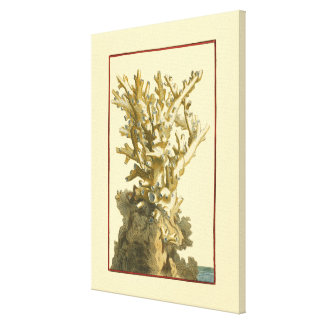 Coral by the Sea Canvas Print