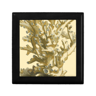 Coral by the Sea Gift Box