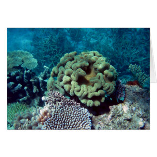 Coral Gardens Greeting Card