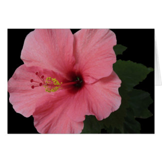 Coral Hibiscus Cards