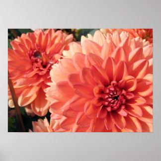 Coral Orange Dahlia Print