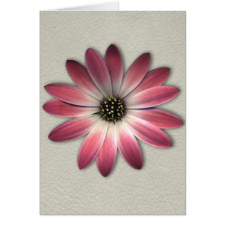 Coral Pink Daisy on Stone Leather Texture Cards