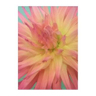 Coral Pink Dalia Hybrid Acrylic Print
