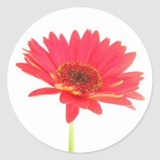 Coral Red Gerbera Daisy Stickers