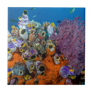 Coral Reef and Fish Tile
