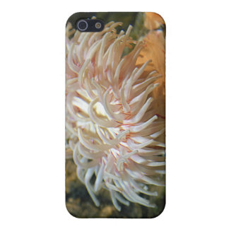 Coral Reef Anemone iPhone Case iPhone 5/5S Cases