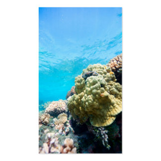 Coral reef business cards