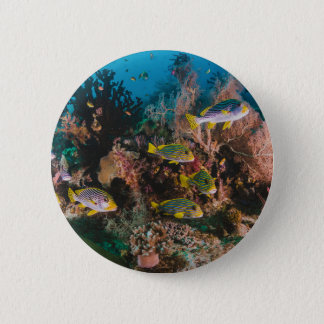 Coral Reef buttons