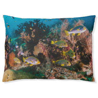 Coral Reef dog beds