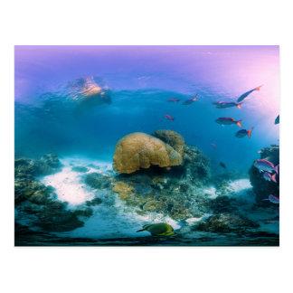 Coral Reef Near Heron Island Postcard