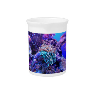 Coral Reef Pitcher