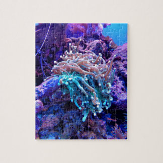 Coral Reef Puzzles