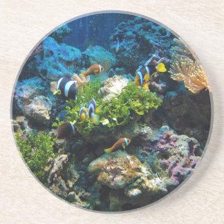 Coral Reef sandstone coaster