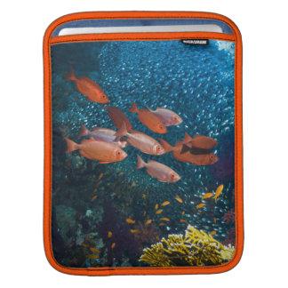 Coral Reef Scenery | Bigeye Or Goggle-Eye iPad Sleeve