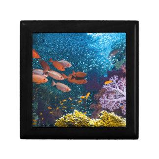 Coral Reef Scenery | Bigeye Or Goggle-Eye Small Square Gift Box