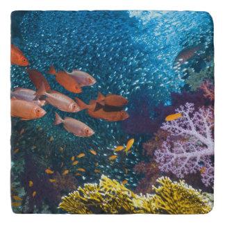 Coral Reef Scenery | Bigeye Or Goggle-Eye Trivets