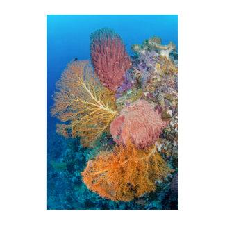 Coral Reef Scenic Acrylic Wall Art