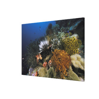 Coral reef stretched canvas print