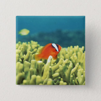Coral reef teeming with tropical fish 15 cm square badge