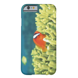 Coral reef teeming with tropical fish barely there iPhone 6 case
