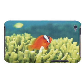Coral reef teeming with tropical fish barely there iPod case