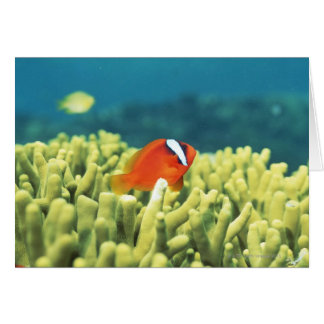 Coral reef teeming with tropical fish greeting card