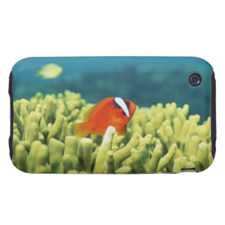 Coral reef teeming with tropical fish tough iPhone 3 covers