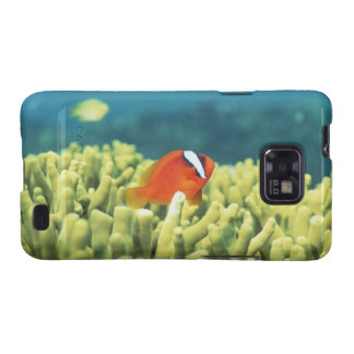 Coral reef teeming with tropical fish samsung galaxy SII covers