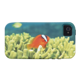 Coral reef teeming with tropical fish iPhone 4/4S covers