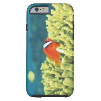 Coral reef teeming with tropical fish tough iPhone 6 case