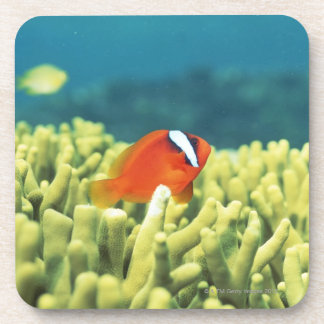 Coral reef teeming with tropical fish beverage coaster