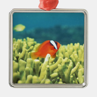 Coral reef teeming with tropical fish Silver-Colored square decoration