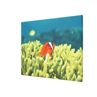 Coral reef teeming with tropical fish gallery wrapped canvas