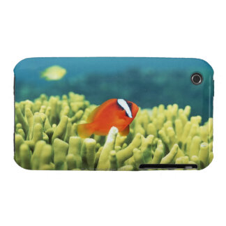 Coral reef teeming with tropical fish iPhone 3 cases