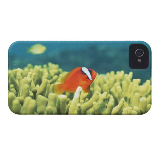 Coral reef teeming with tropical fish iPhone 4 case