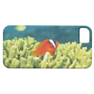 Coral reef teeming with tropical fish iPhone 5 cases
