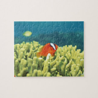 Coral reef teeming with tropical fish jigsaw puzzle