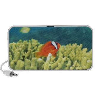 Coral reef teeming with tropical fish laptop speaker