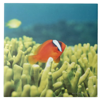 Coral reef teeming with tropical fish large square tile
