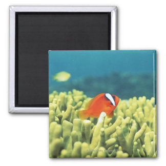 Coral reef teeming with tropical fish square magnet