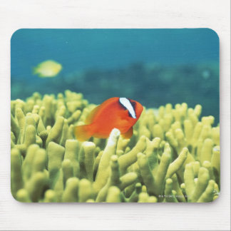 Coral reef teeming with tropical fish mouse pad