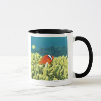Coral reef teeming with tropical fish mug