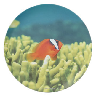 Coral reef teeming with tropical fish dinner plates